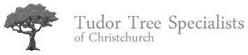 Tudor Tree Specialists